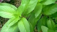 Bitkileri Akıllıca Kullanmanın Yararları