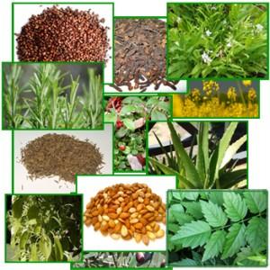 Bitkiler Konusunda Önlemler ve Uyarılar