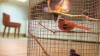 Lambalı Kuş Kafesi