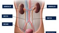 Üriner Sistem Enfeksiyonları (ÜSE)